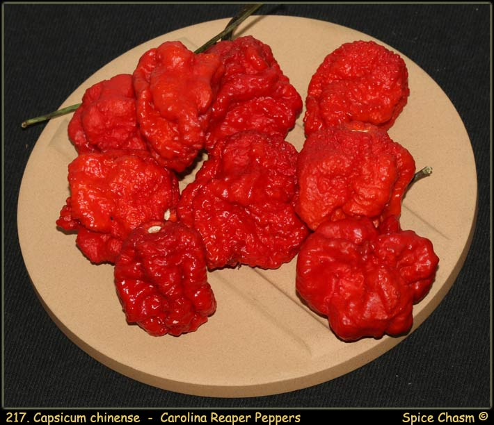 Fresh Carolina Reaper Peppers - 新鮮辣椒