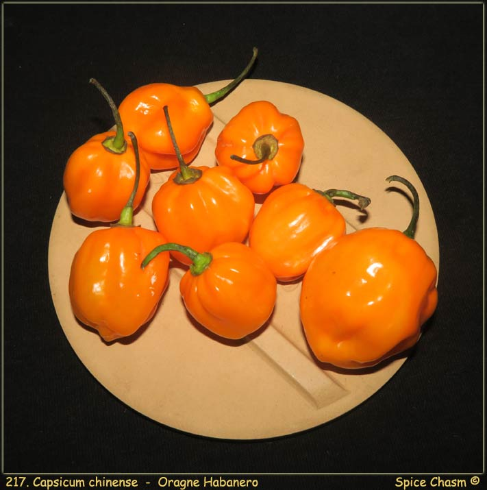 Fresh Habanero Peppers - 乾鮮辣椒