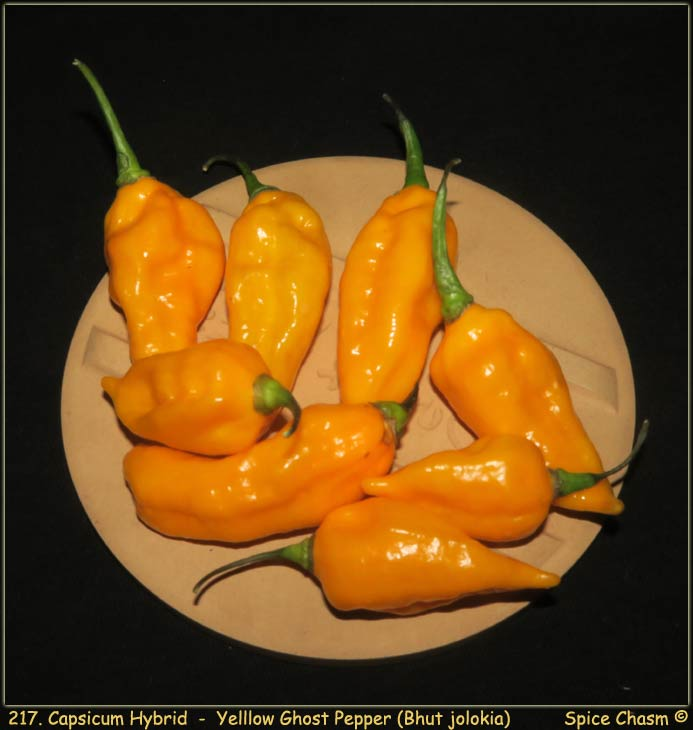 Fresh Ghost Peppers - 新鮮辣椒