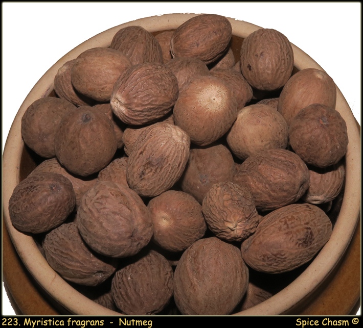 Nutmeg ~ Myristica fragrans