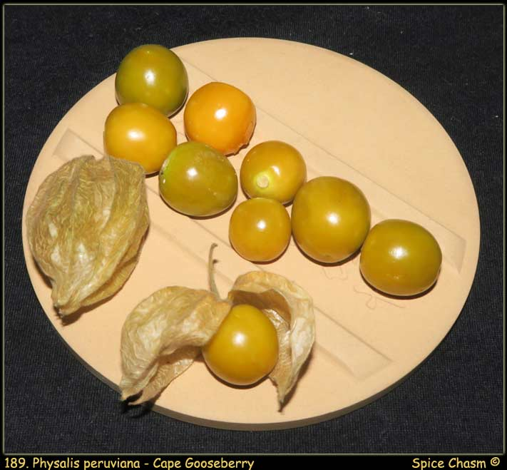 Physalis peruviana - Cape Gooseberry - 海角鹅莓